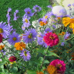 jardins EM